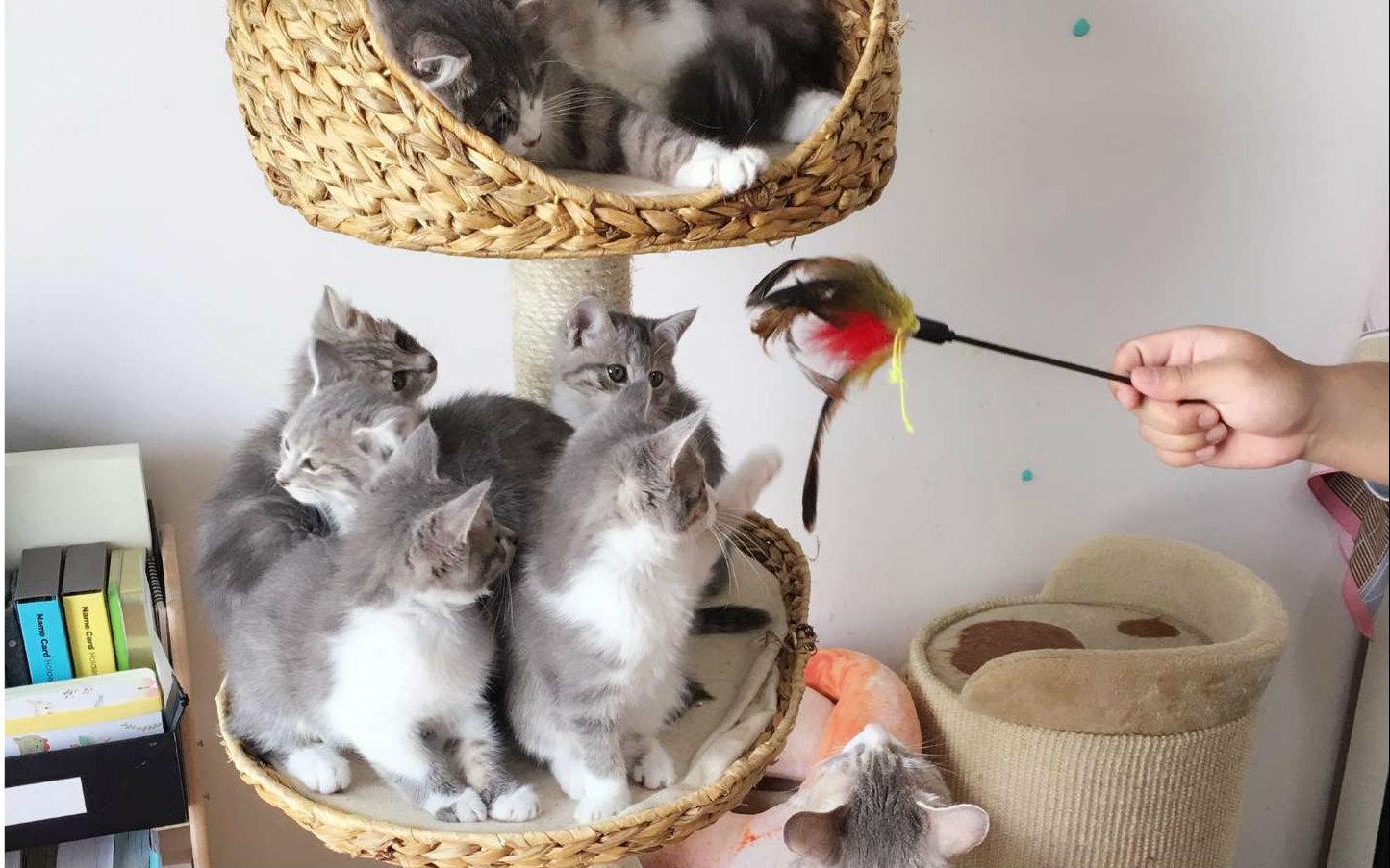 喵播-小猫的饯别礼