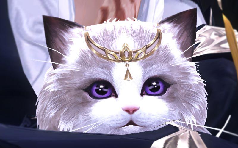 壁纸动物猫猫咪小猫桌面800_500