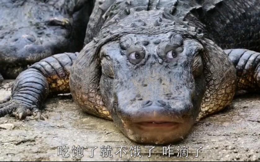 咋滴了因为我是鳄鱼啊