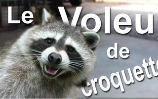 【法国猫片】偷猫粮的干脆面 @柚子木字幕组