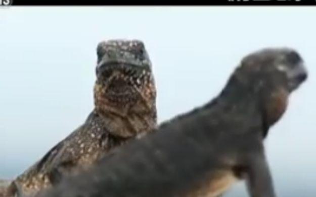 """BBC纪录片涉嫌造假 《行星地球2》画面由2个镜头""""缝合""""而成"""