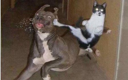猫狗大战国�y�b9aj:f�_猫狗大战,最后竟然猫赢了
