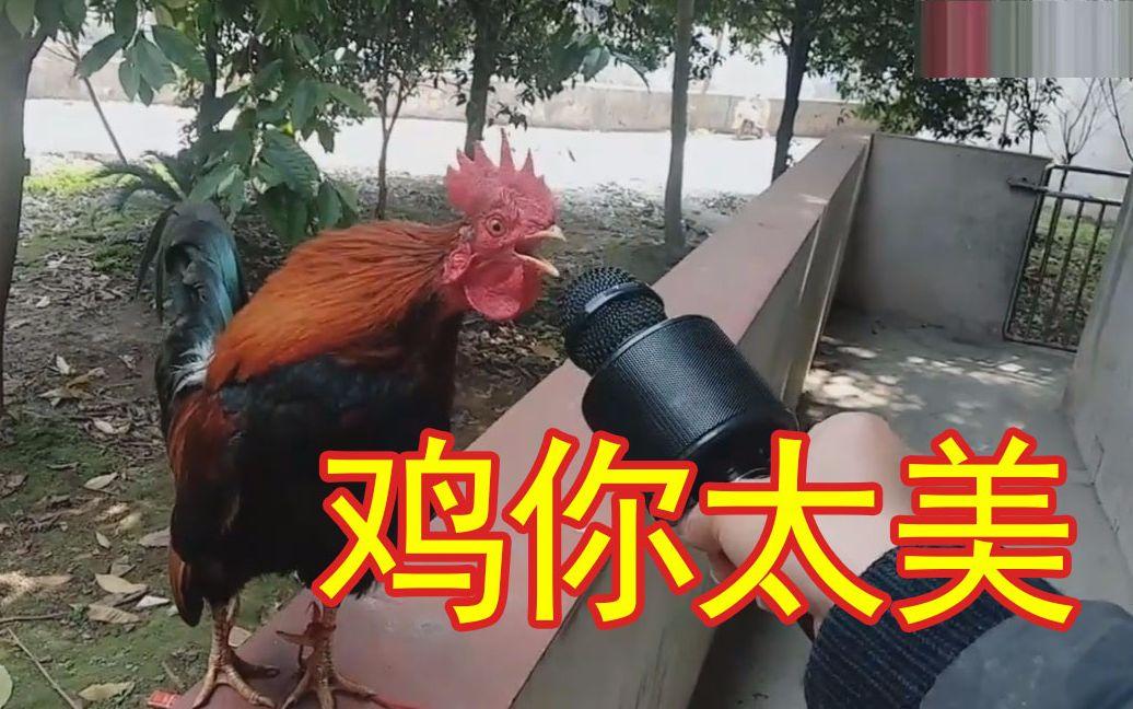 全村最有才华的鸡