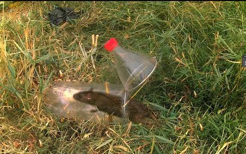 用塑料瓶制作的捕鼠器捉老鼠