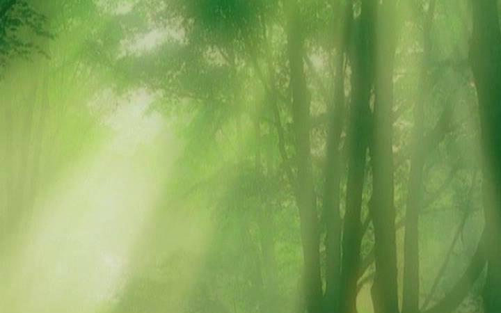 【陶笛】森林狂想曲forest rhapsody图片