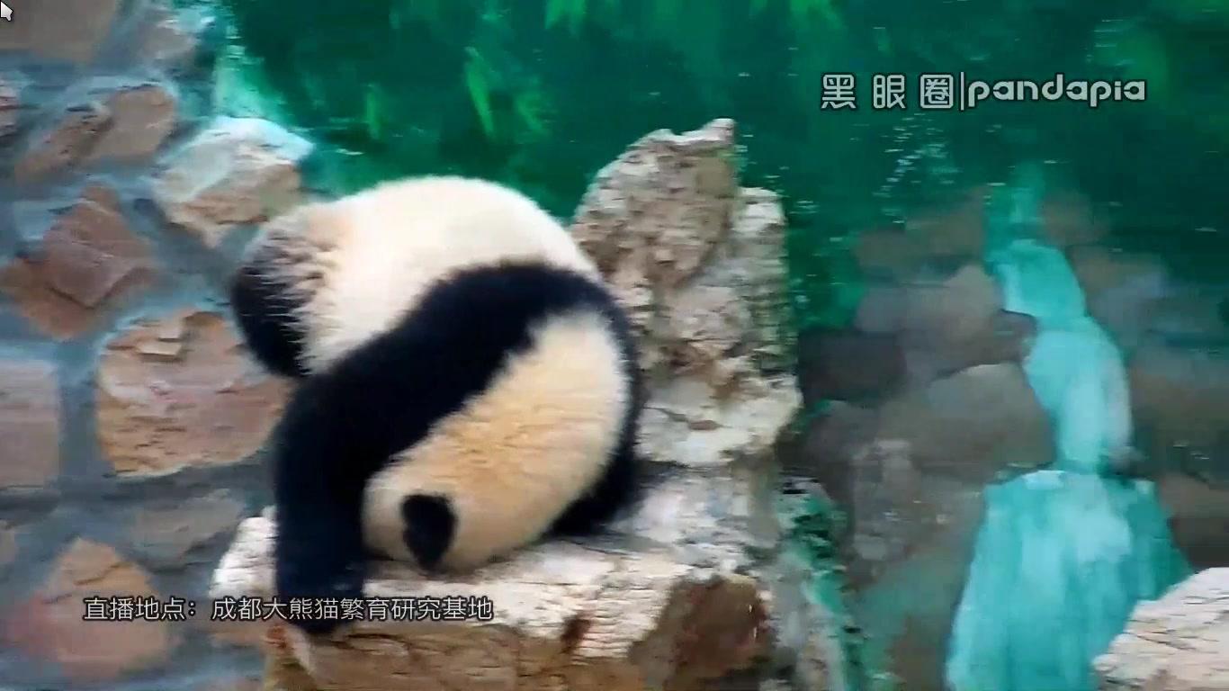 http://www.faxingw.cn/upload/image/20170531/1496192944576322.png_20170531 假山上的壁画熊-星繁