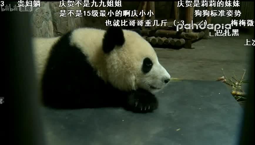 熊猫tv国民baby