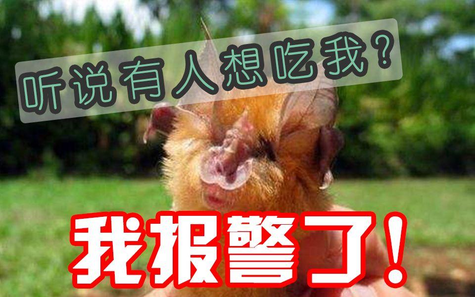 【辟谣】武汉人吃蝙蝠吗?带你了解真正的菊头蝙