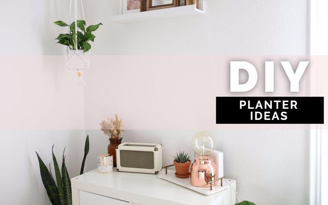 【anne】diy 植物创意 | 用植物装饰你的房间