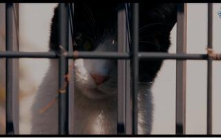 【剧情】猫大爷叫也叫不来 2016日影【三角字幕组】风间俊介 / 鹤野刚士 / 松冈