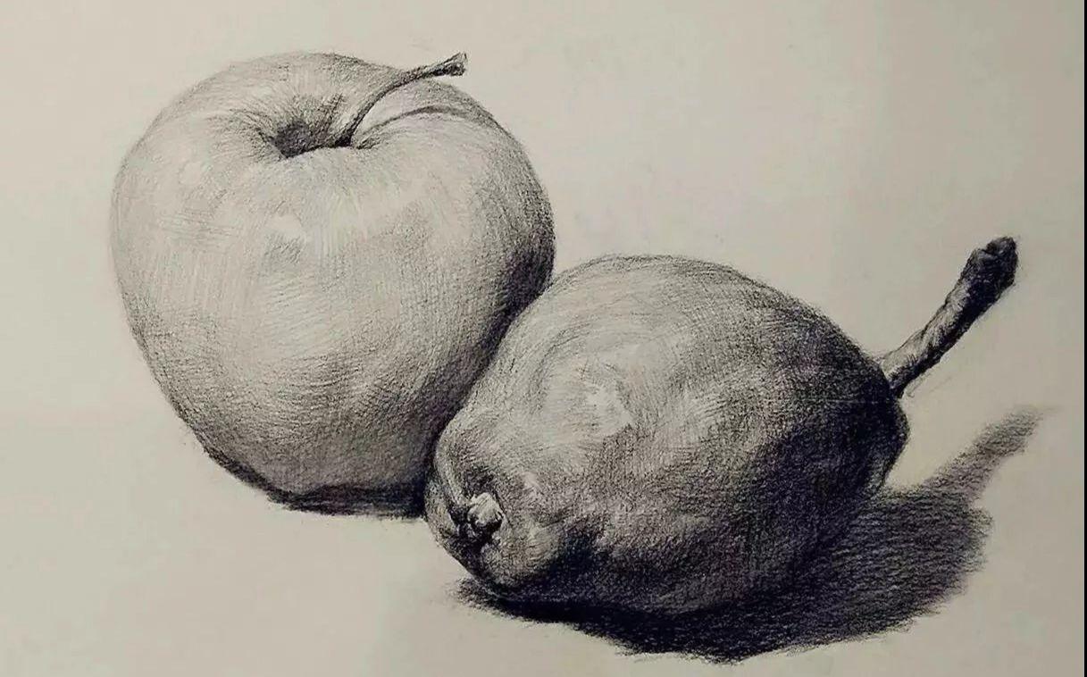 【合尚教育】素描静物教程》》苹果和梨该怎么画?图片