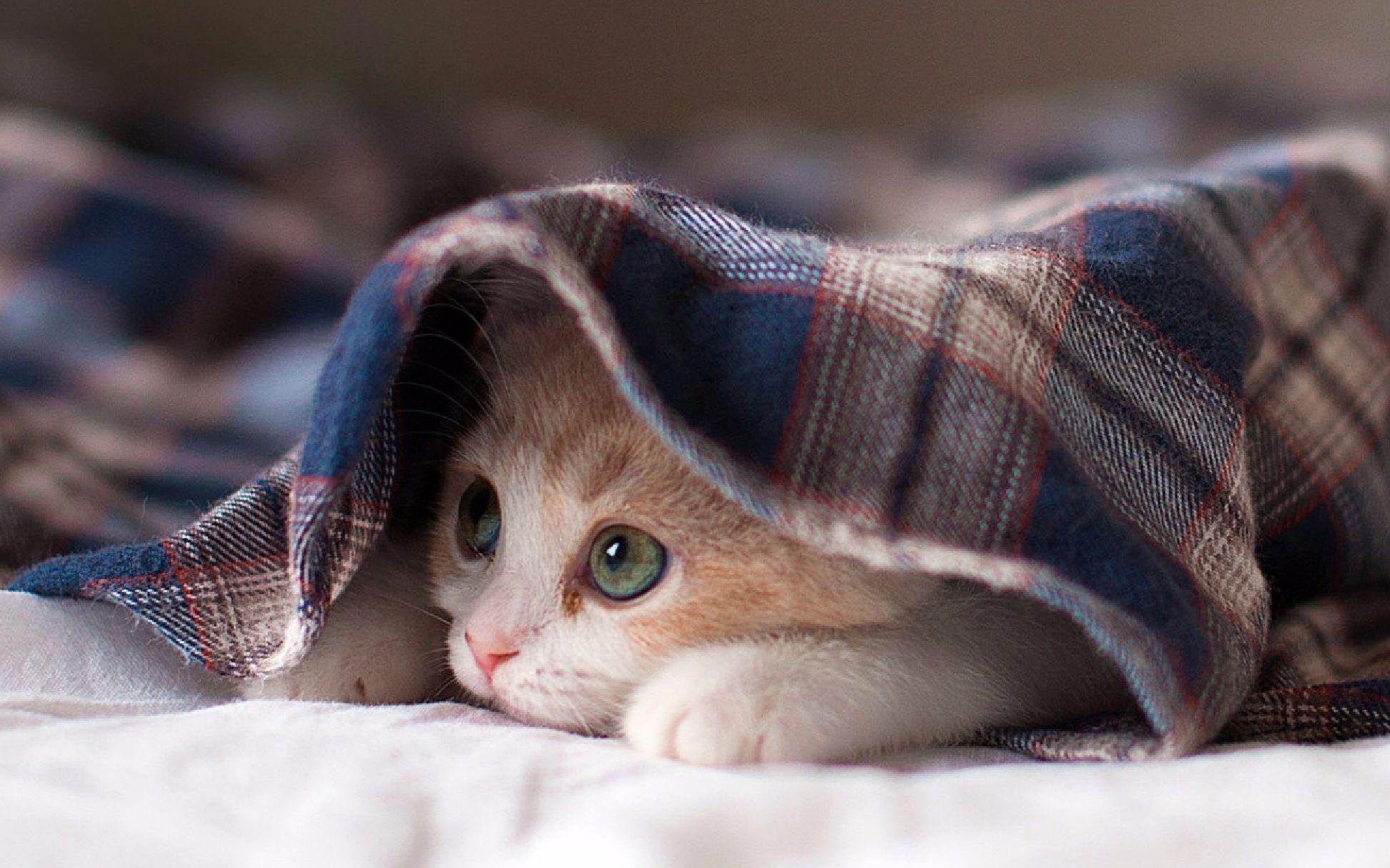 【猫咪】猫咪日常-自娱自乐