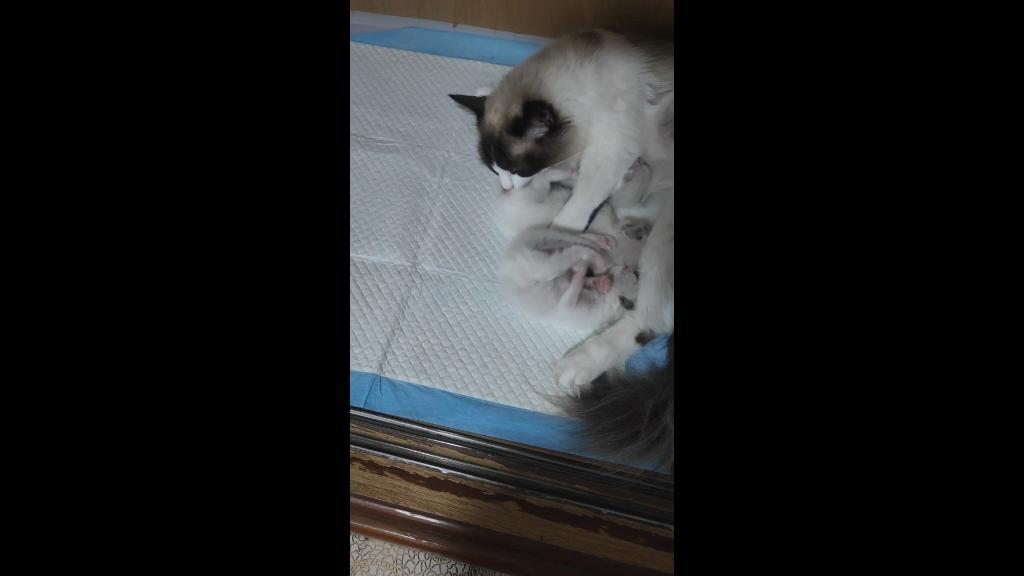 2021.05.21 小猫第12天