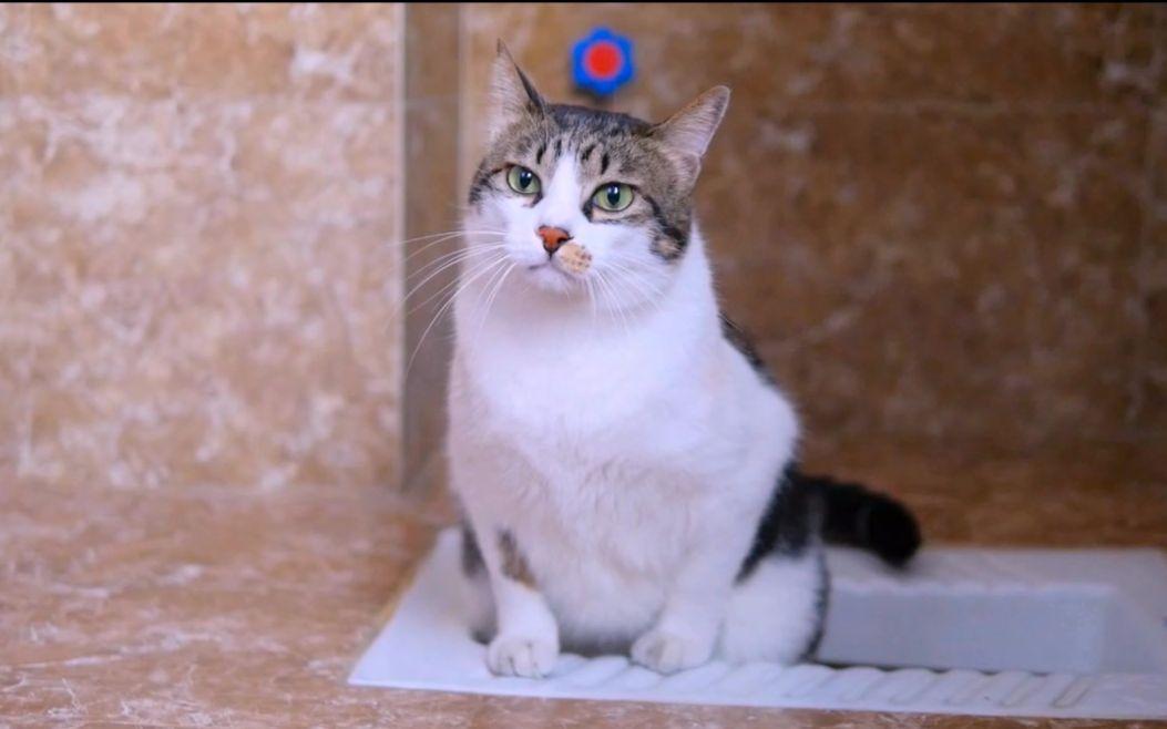 壁纸 动物 猫 猫咪 小猫 桌面 1053_658