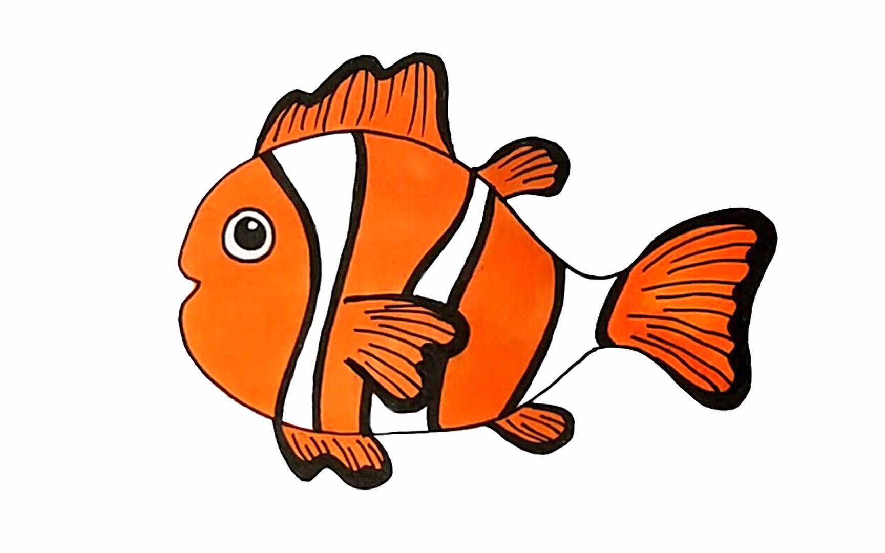 原来鱼的臀鳍在这里