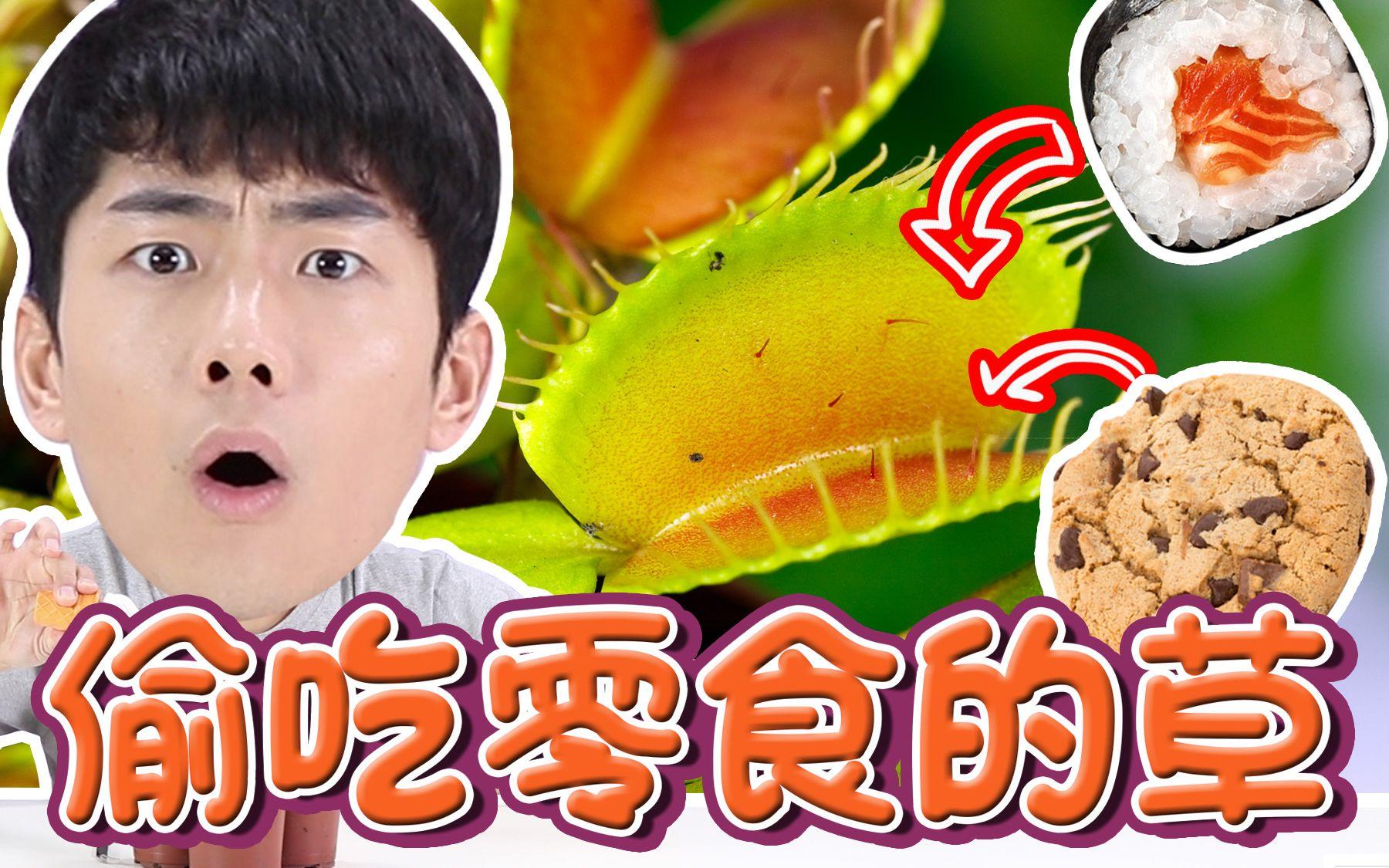 坤坤的神奇朋友是会吃零食的植物?!