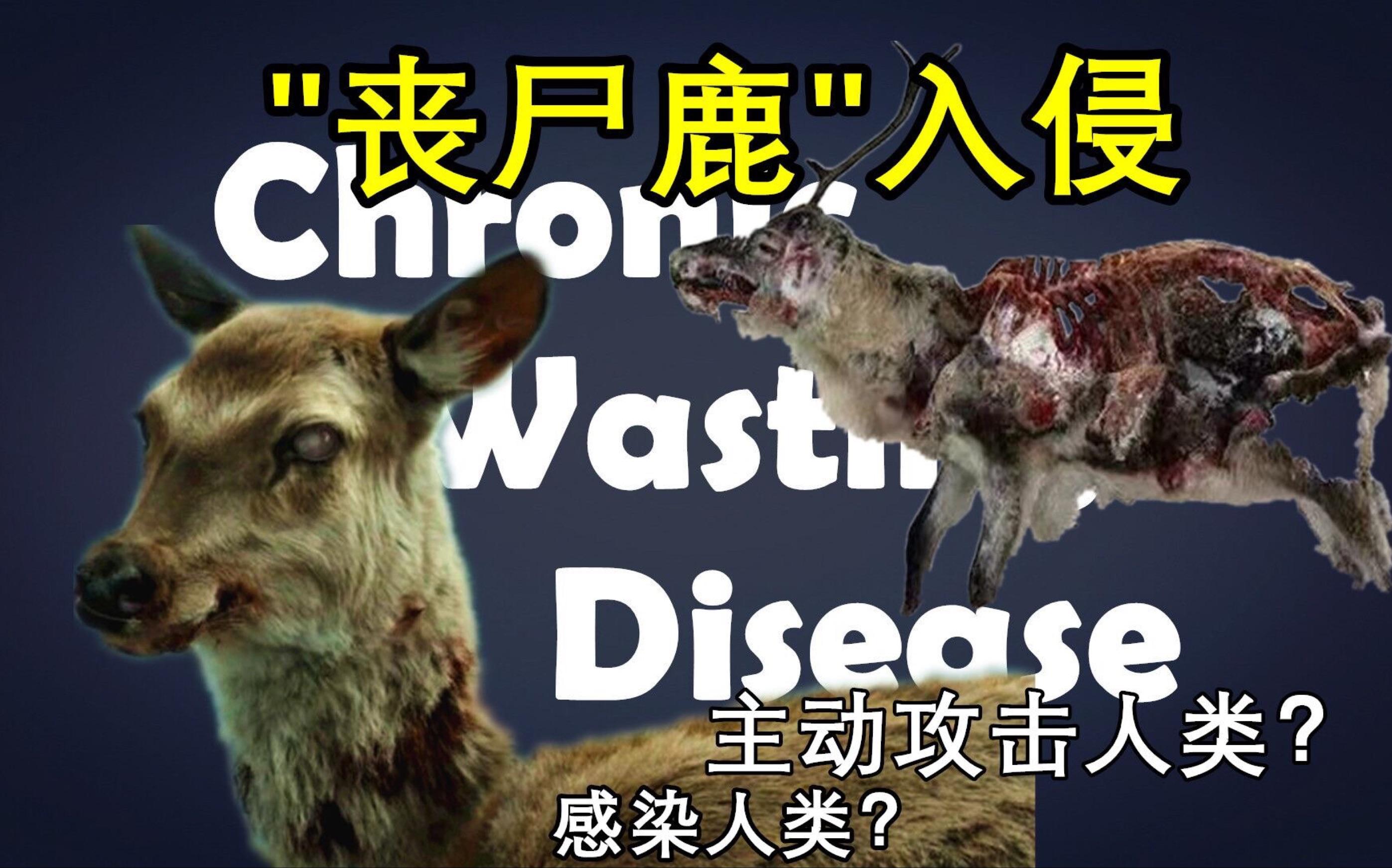 美国爆发丧尸鹿病毒?!疯鹿主动攻击感染人类?是现实版《釜山行》还是夸大的谣言?