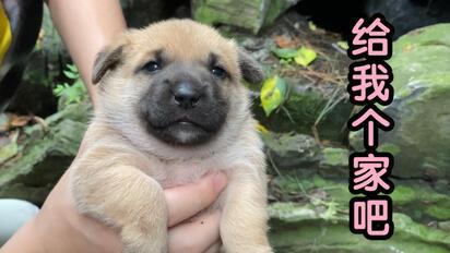 景區山洞里藏著一窩險些被撲殺的小奶狗                                               流浪狗動物救助領養