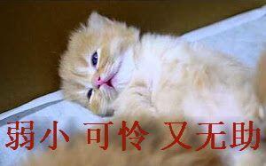 【喵星人】弱小、睡觉、又无助---小表情可怜摆还有吗良心包你猫咪图片