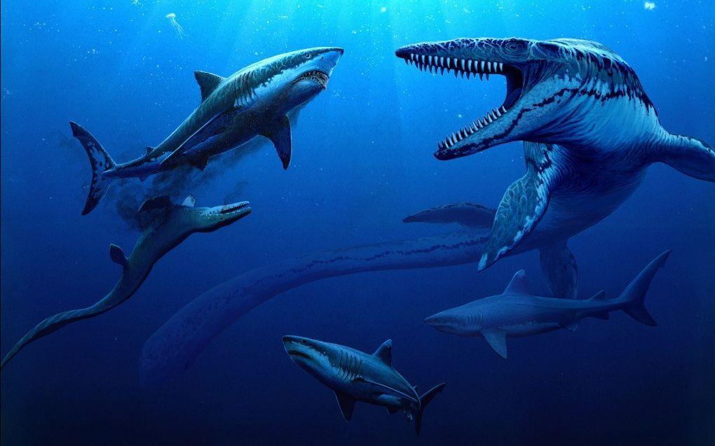 【鬼谷说】软骨鱼:头铁真汉子 亿年五五开