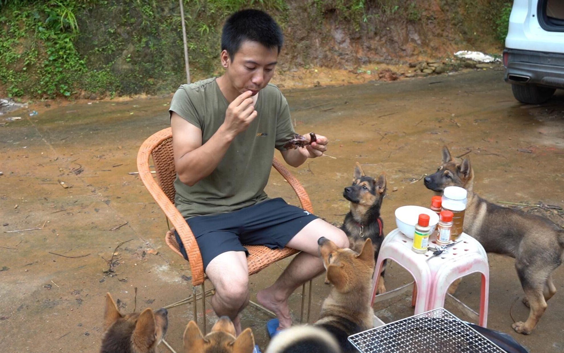 华农兄弟:兄弟送来一只鸽子,整天不吃不喝,只好把它烤了