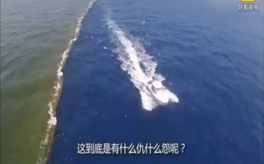 大西洋与太平洋有多大仇?海水相遇永不融合!