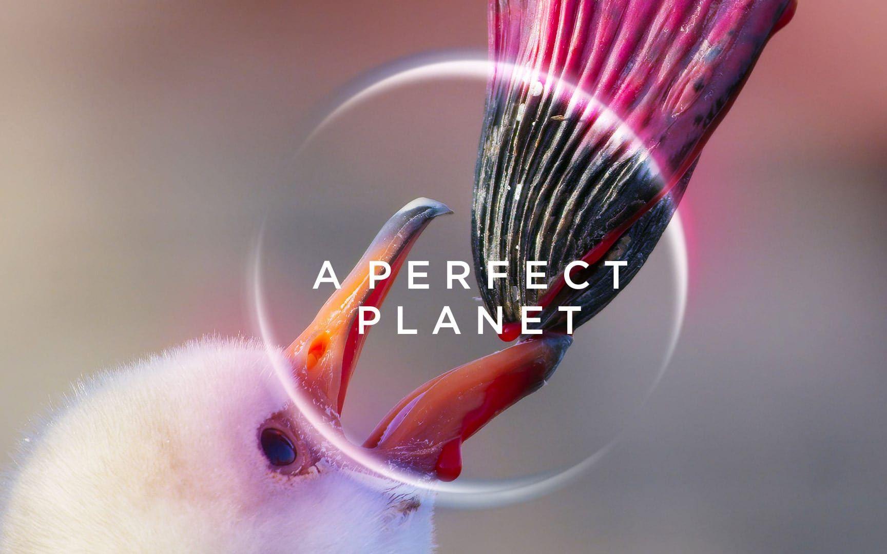 用鲜血投喂宝宝的鸟类,浑身上下都变成了血红色,豆瓣9.6纪录片