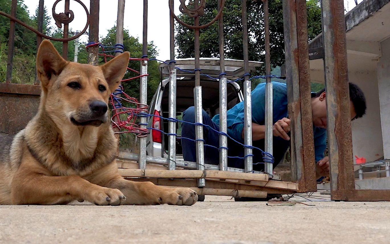 华农兄弟:场里的铁门烂了,我们用铁丝绑一下,避免小狗到处乱跑