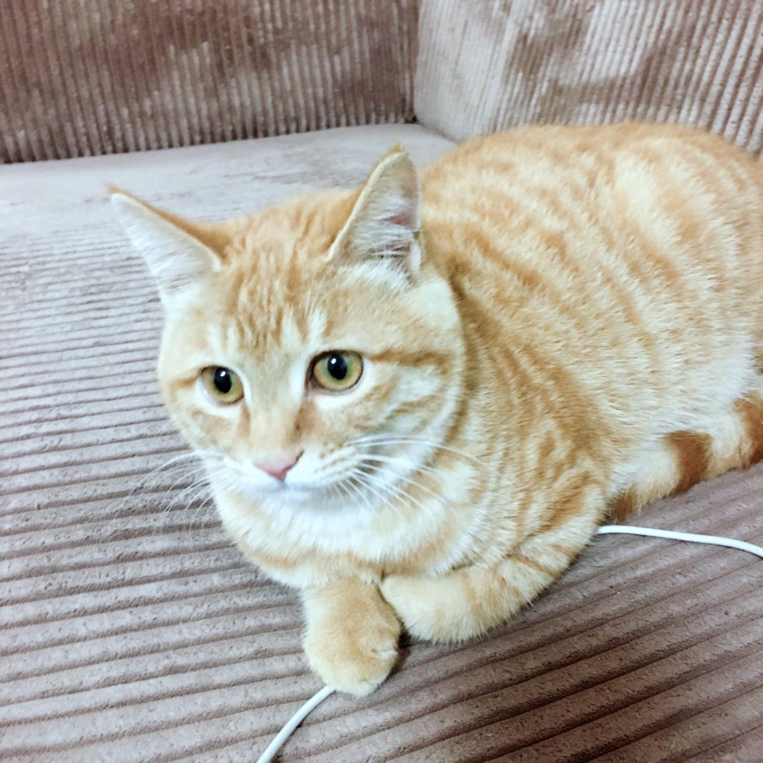 橘猫小胖为何露出肚皮?请看今日份撸猫大餐