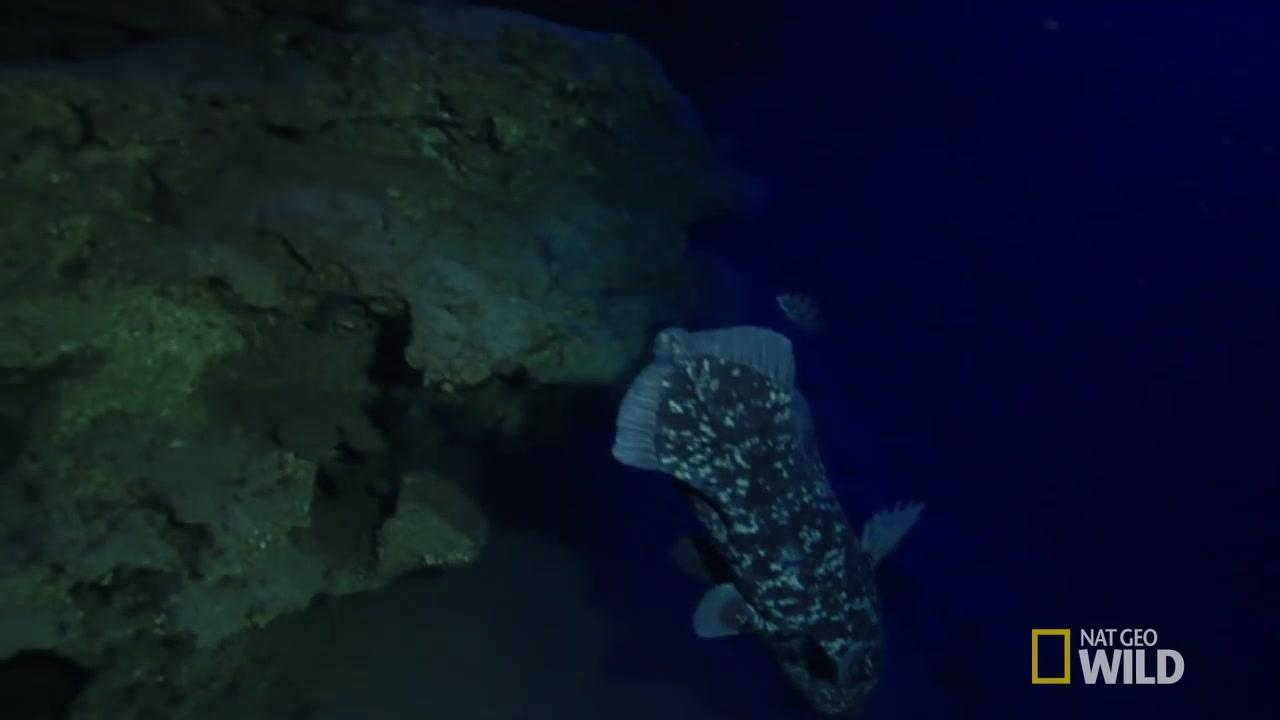 海洋传奇国语_发现腔棘鱼-矛尾鱼 Finding the Coelacanth - DinoFish_哔哩哔哩 (゜-゜)つ ...
