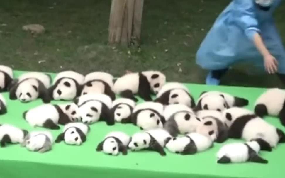 當年那個偷熊貓的女人現在墳頭草多......