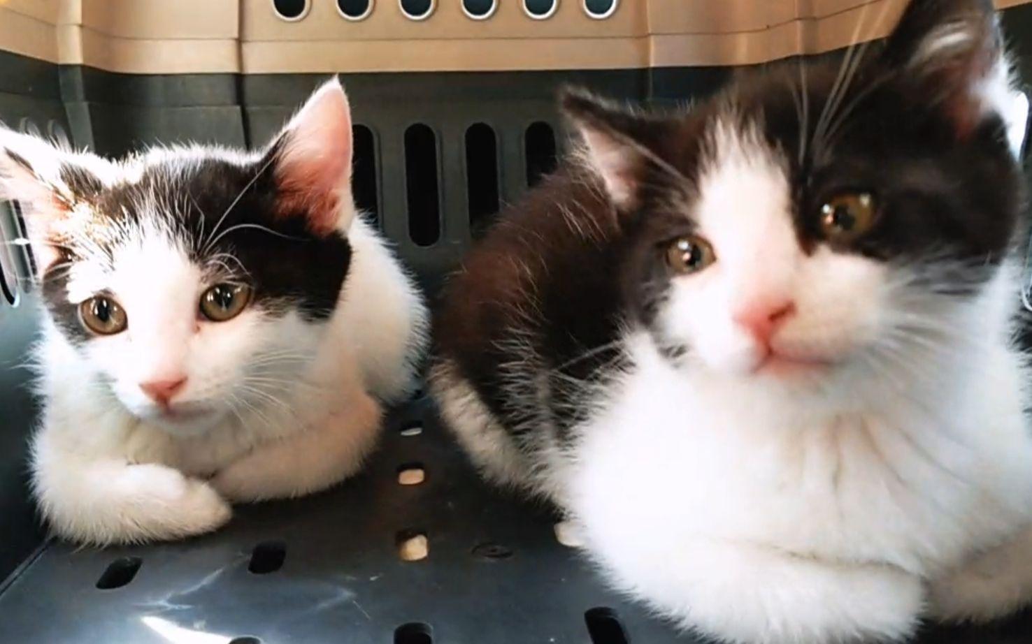 一群猫头像_喵播20170212_新来的两只奶牛猫_哔哩哔哩 (゜-゜)つロ 干杯~-bilibili