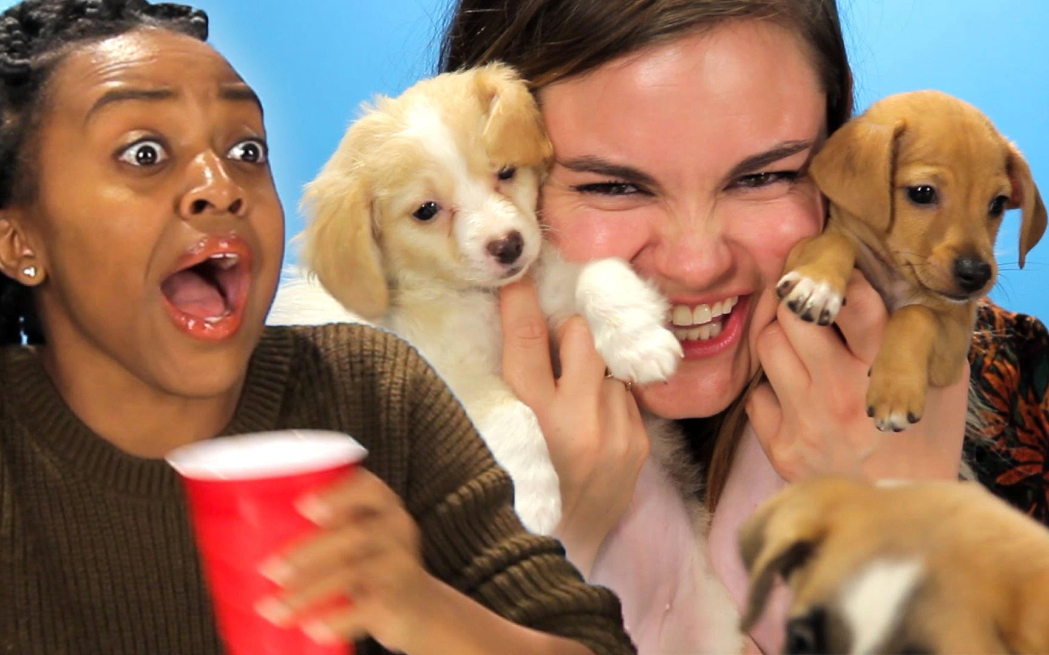 老婆与狗的情色生活_醉酒女人与狗子的激情碰撞【小青龙字幕组】【buzzfeedvideo】