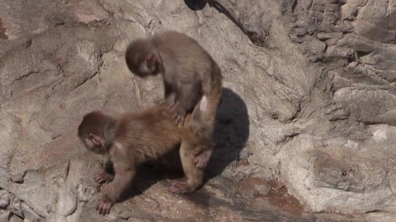 人与动物做爱1715ia{0_交配的全部相关视频_bilibili_哔哩哔哩幕视频网
