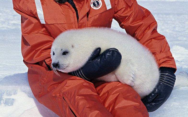 可爱小北极熊_和小海豹一起玩耍_哔哩哔哩 (゜-゜)つロ 干杯~-bilibili