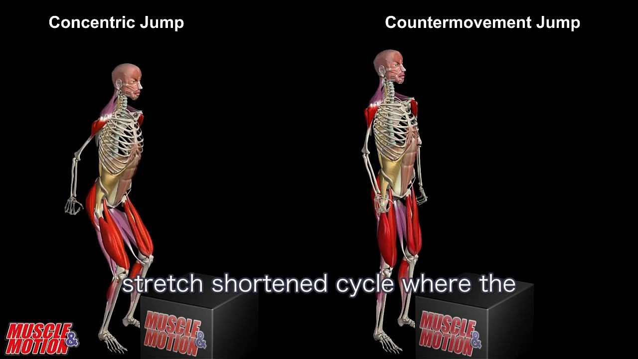 Landmine Squat Jumps - Anatomical Analysis