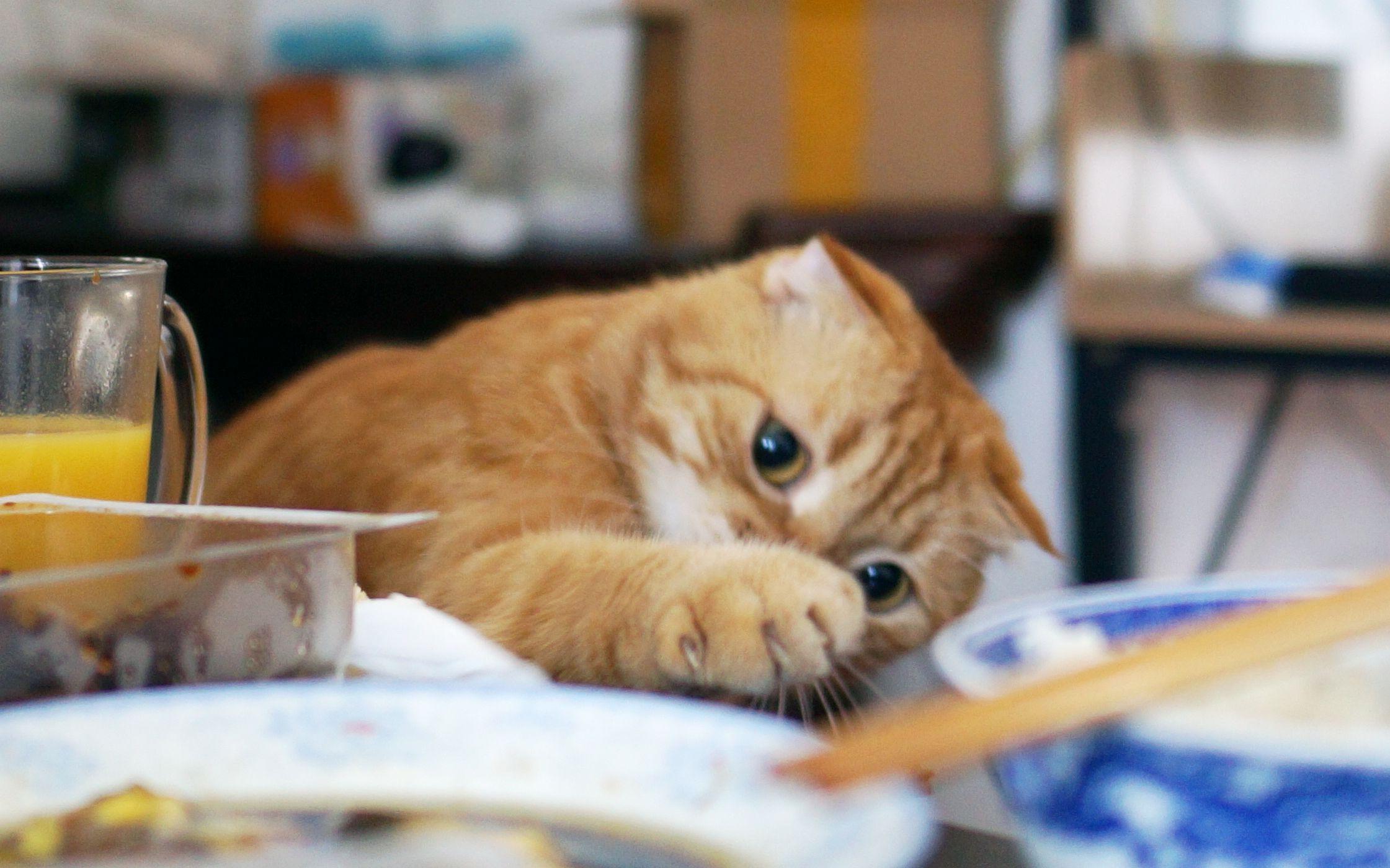 一群猫头像_养一只随时想吃的橘猫是怎样的体验?铲屎的还能不能好好吃饭 ...