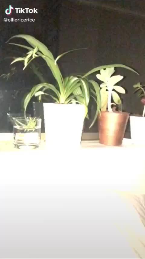 当你床头的植物掉下来
