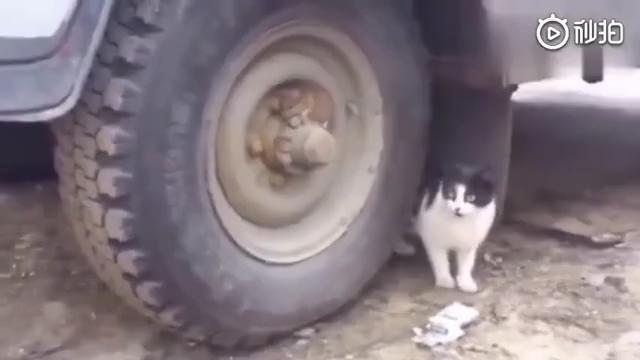 老鼠:灾难始终慢我一步