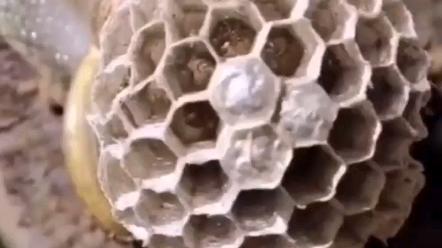 蜂窝煤技术